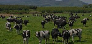 Решения для агропромышленного комплекса